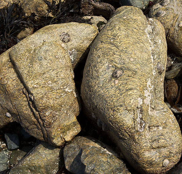 Rock - Man Of War Gneiss - Polpeor Cove (S17)