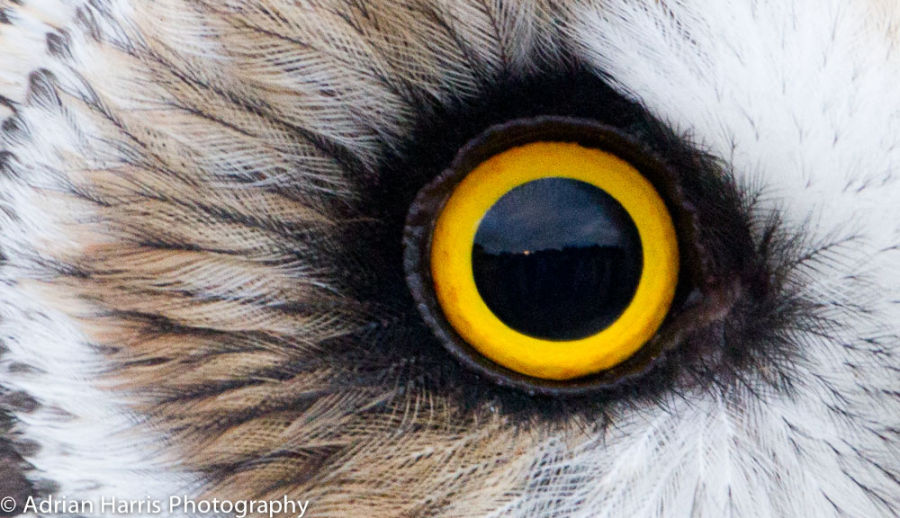 Owl Sunset