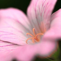 Garden Flowers, Norfolk