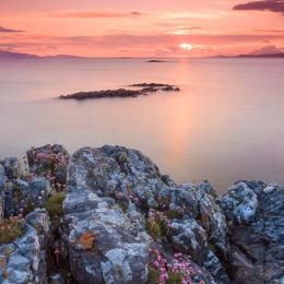 Sea Pinks, Arisaig, Scotland