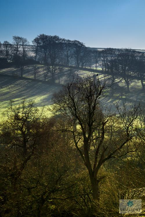 Frosty Trees, Derbyshire
