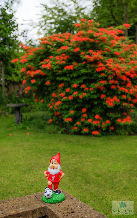 Small Town Garden, Cheshire