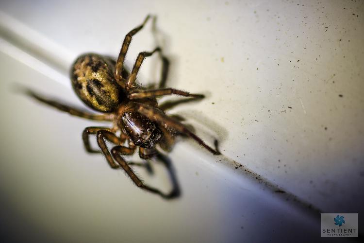 Spider, Manchester