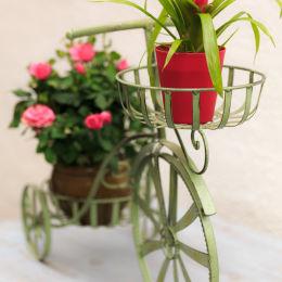 Guzmania Tricycle