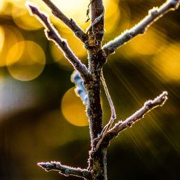 Icy Twigs & Sun Rays