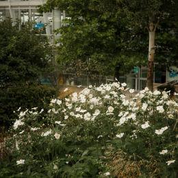 Liverpool One Flowers & Gardens