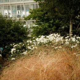 Liverpool One, Flowers & Gardens