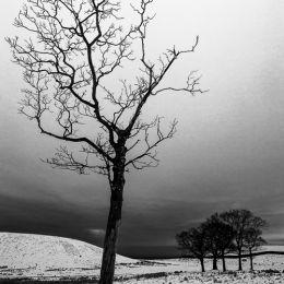 Lyme Park Snow Tree - 3 Views #2