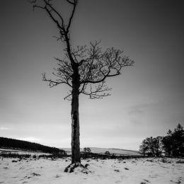 Lyme Park Snow Tree - 3 Views #3