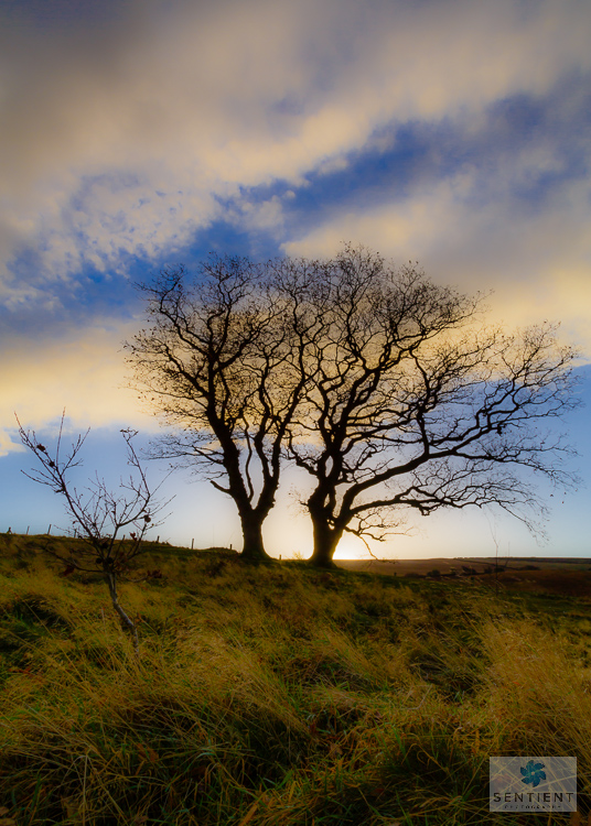 Lyme Park Tree Sunrise