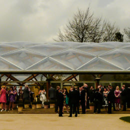 Wedding Guests Celebrate
