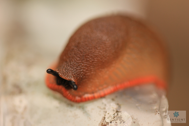 Slug Close Up #2