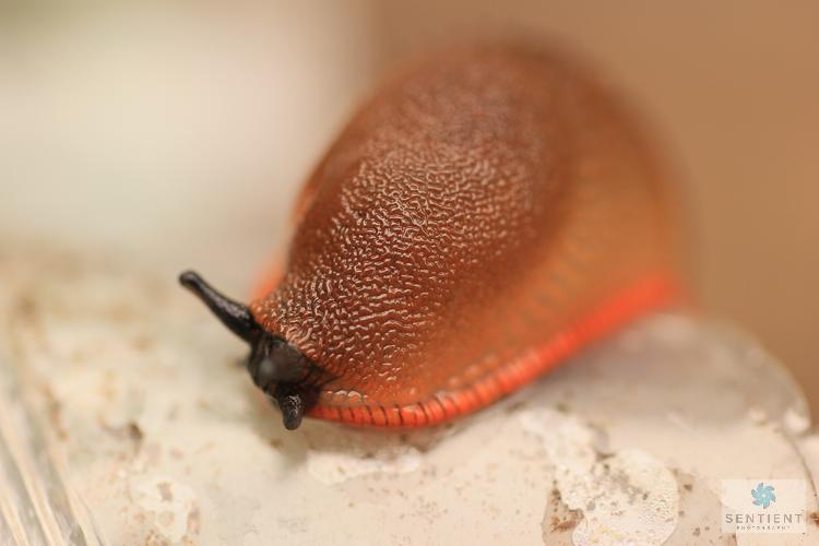 Slug Close Up #3