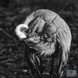 Stork Eye, Martin Mere