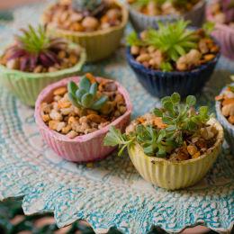 Cactus Cakes, Sun House Garden
