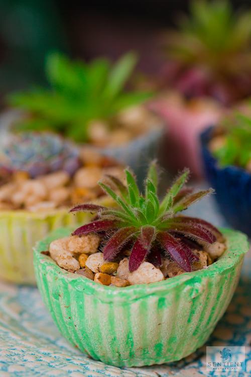 Cactus Cakes - Sun House Garden