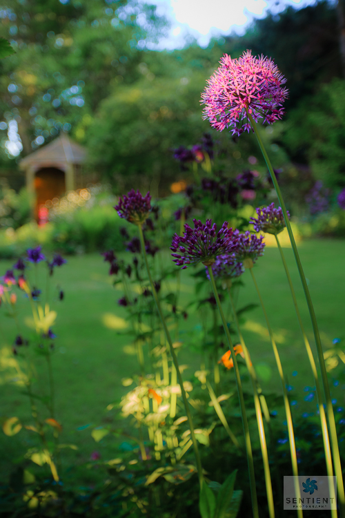 Sun House Garden, Bramhall
