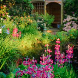 Sun House Garden - Bramhall