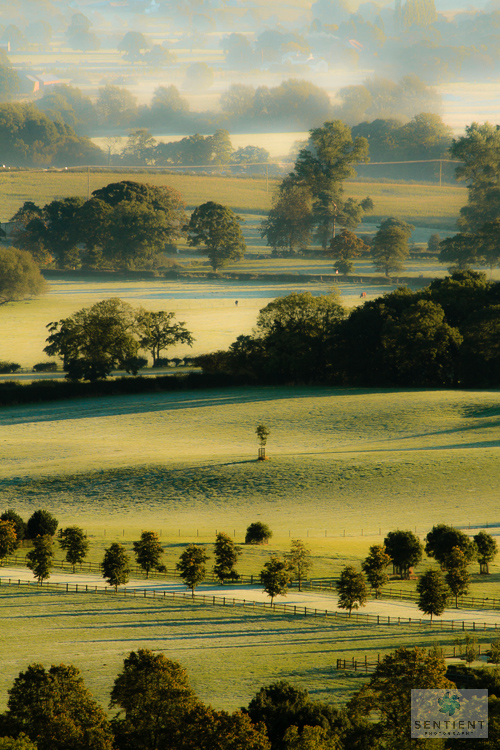 Trees & Fields Alderley Edge