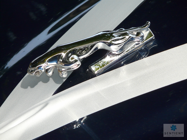 Jag & Wedding Car Ribbons