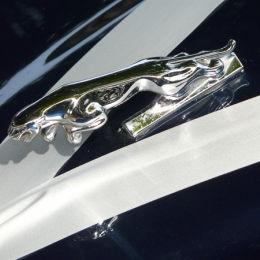 Jag & Wedding Car Ribbons