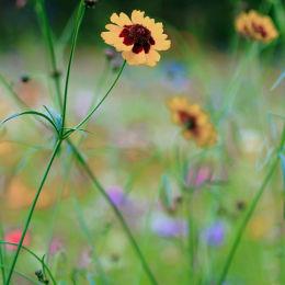 Wild Flower Meadow #3