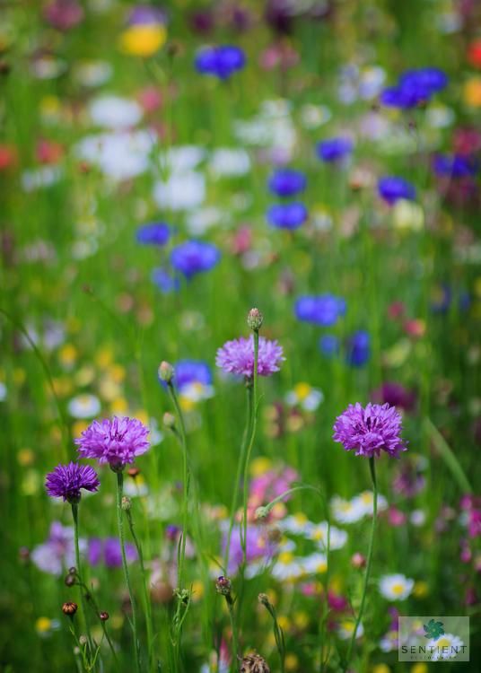 Wild Flower Meadow #4
