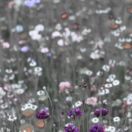 Wild Flower Meadow #6