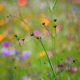 Wild Flower Meadow #2