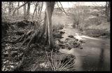 River Colne 1
