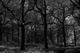 Oak Grove, Little Wittenham Wood