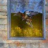 Kestrel:  80 x 80 cm,  oil on canvas.