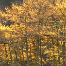 Ormsary Sunshine Argyll