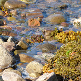 Stonefield Shore - Kintyre