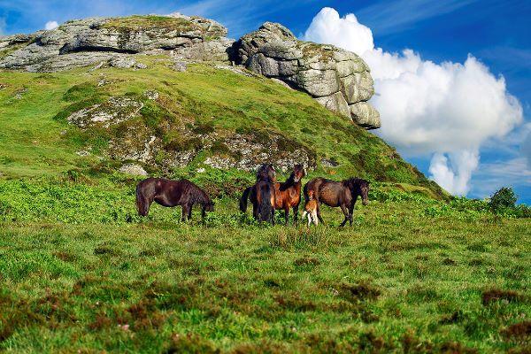 Saddle Tor Ponies