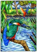 Kingfishers in their habitat