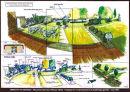 Garden visual