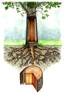 Tree cross section