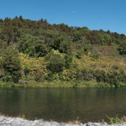 Kamahi Trout Pool, Tongariro River