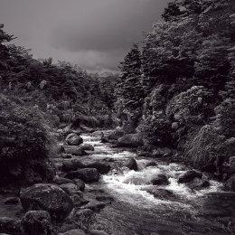 Tongariro Stream