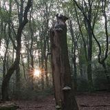 Sunrise Speulderbos
