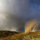 Waving grasses