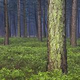 Dutch National Landscape 'Het Groene Woud'