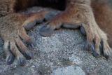 Madagascar Lemur Hands