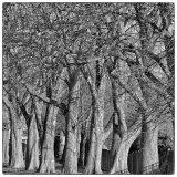 Broomfield Treeline