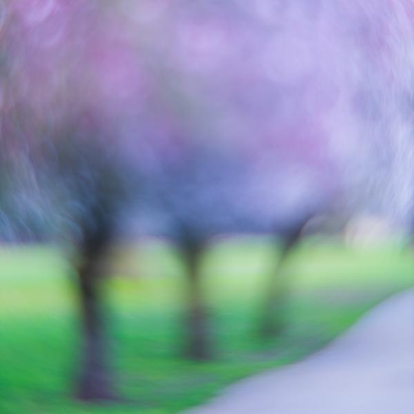 Grovelands Blossom