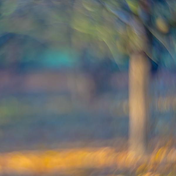 Grovelands Tree 7