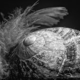 Feather and Snail