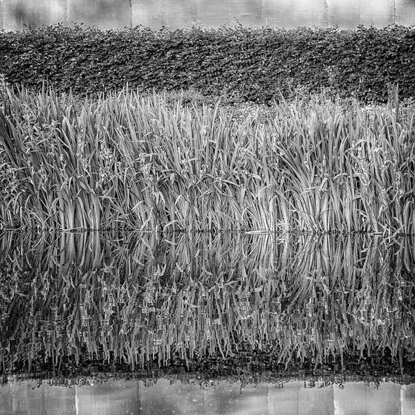 Broomfield reflection 1