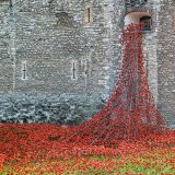 Tower Poppies (detail)